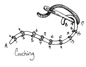 couching diagram